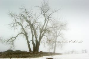 PostcardsfromColorado-130202
