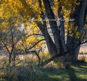 PostcardsfromColorado-131029
