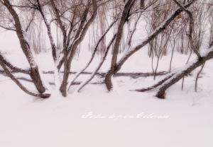 PostcardsfromColorado-140109