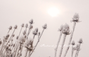 PostcardsfromColorado-140210