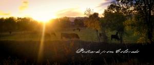 PostcardsfromColorado-141008