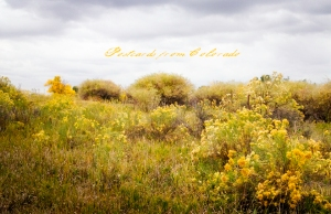 PostcardsfromColorado-141017