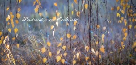 PostcardsfromColorado-141023