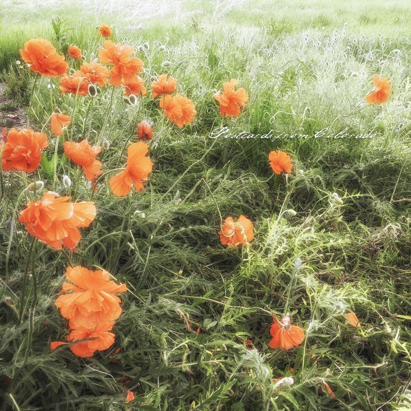 postcardsfromcolorado_2016_5_26